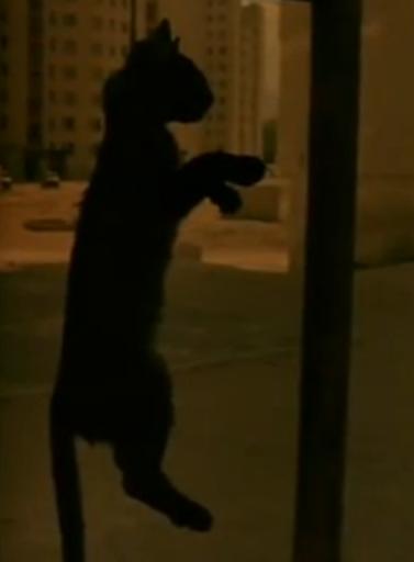"Imagen tomada de ""A Short Film About Killing"" (1988)."