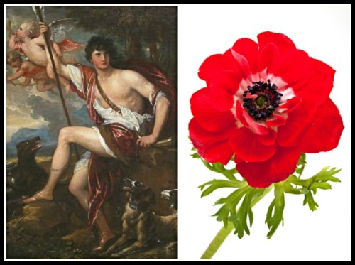 "On the Left: ""Adonis"" by Benjamin West (1800). On the Right: An anemone"