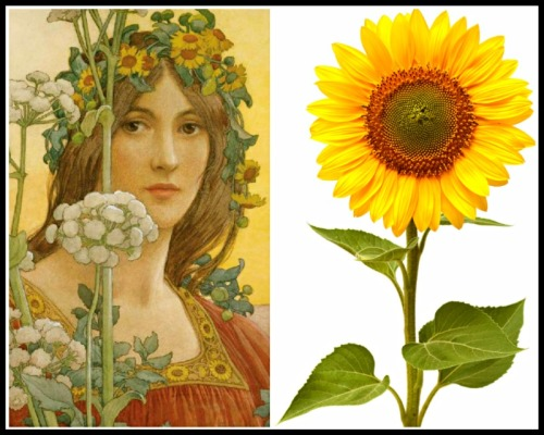 "On the Left: ""Clytie"" by Élisabeth Sonrel (20th century). On The Right: A Sunflower."