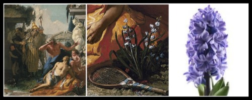 "On the left: Giovanni Battista Tiepolo, ""The death of Hyacinth"". 18 th century. Painting and detail, respectively. On the right: A Hyacinth."