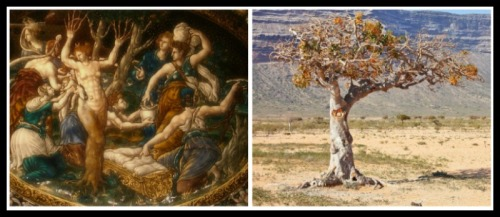 "On the Left: ""Myhrra assisted by Lucina, the Goddess of Birth"" by Jean de Court (1560).. On the Right: Myrrh tree."