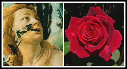 "On the Left: Chloris. Detail ""Primavera"" by Sandro Botticelli.1478. On the Right: Rose Flower."