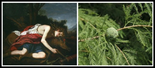 "On the Left: ""Cyparissus"" (mourning his deer) by Jacopo Vignali. 1670. On the Right: Bald Cypress Leaves."