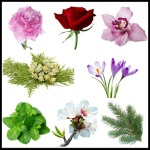 flowers-and-plants-in-greek-myths_2