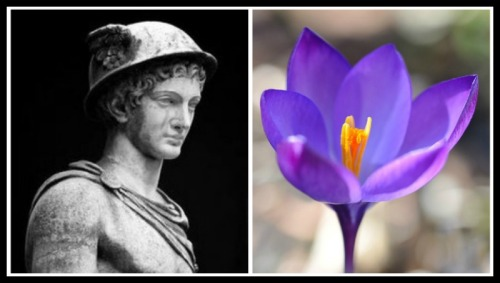 "On the Left: ""Mercury (Hermes)"" Statue at the Museum Pio Clementino, Vatican. On the Right: Crocus Flower."