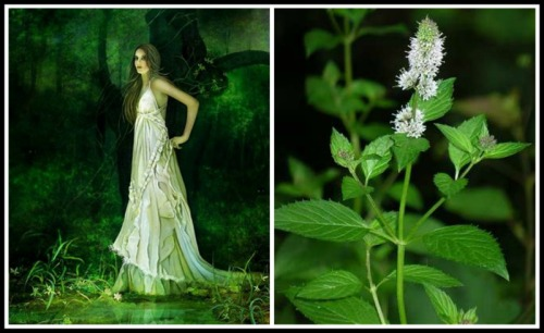 On the Left: Nymph Minthe by W. Szczepanska. 21st century. On the Right: Mint Plant.