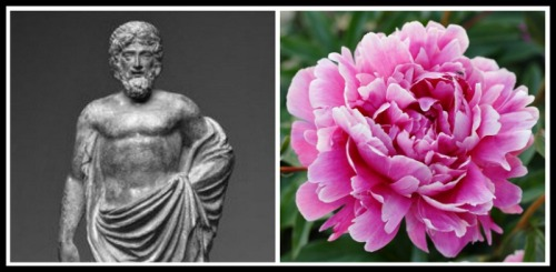 On the Left: Statuette of Paeon . 2nd century. On the Right: Peony, flower.