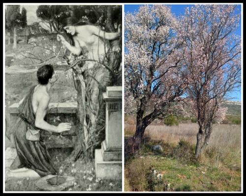 "On the Left: ""Phyllis and Demophoön"" by John William Waterhouse. 19th century. On the Right: Almond Trees."